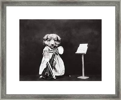 Little Fiddler Framed Print