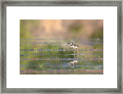 Little Flaps Framed Print by Ruth Jolly