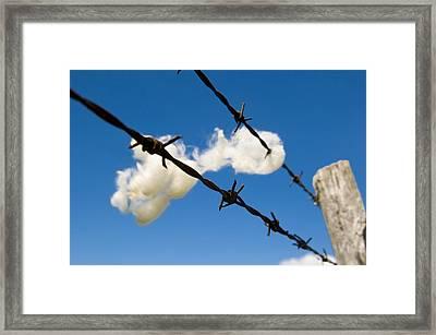 Little Fluffy Clouds 1 Framed Print