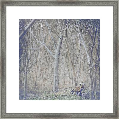 Little Fox In The Woods 2 Framed Print by Carrie Ann Grippo-Pike