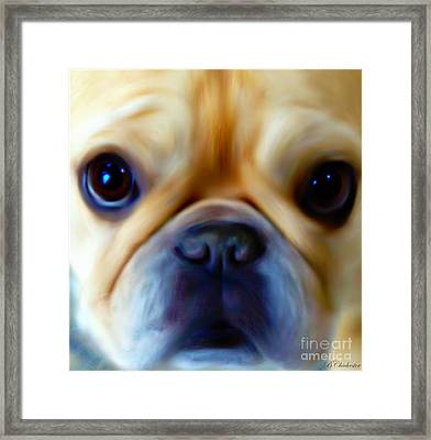 Little Frenchie Face Framed Print by Barbara Chichester