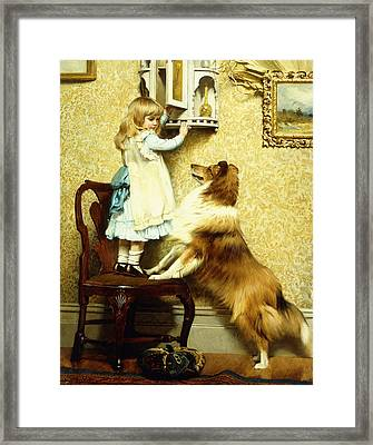 Little Girl And Her Sheltie Framed Print by Charles Burton Barber