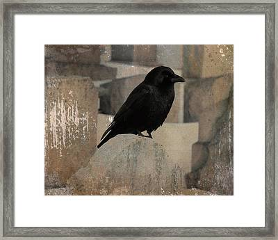 Little Gothic Crow  Framed Print by Gothicrow Images