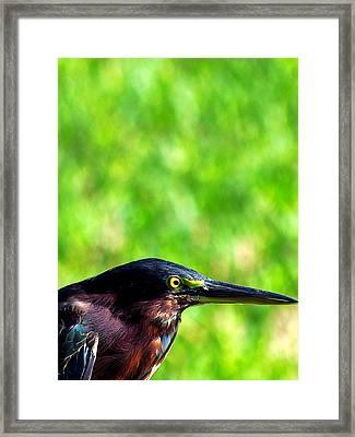 Little Green Heron 006 Framed Print by Chris Mercer