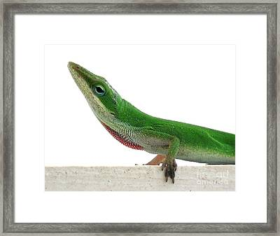 Framed Print featuring the photograph Little Green by Sally Simon