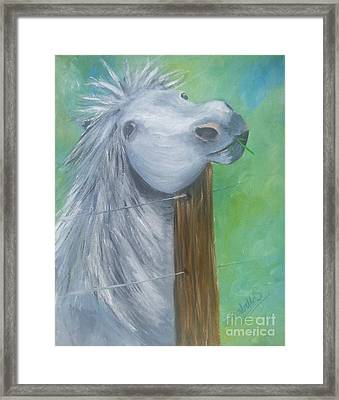 Little Grey Has An Itch Framed Print by Isabella F Abbie Shores FRSA