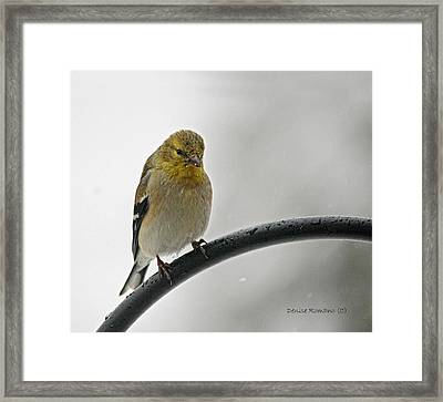 Framed Print featuring the photograph Little Guy by Denise Romano