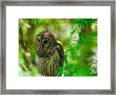 Little Hoot Owl Framed Print