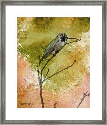 Little Hummingbird Framed Print