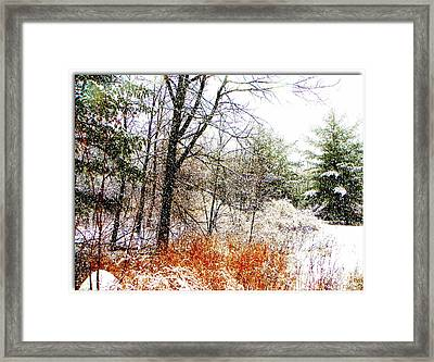 Little January  Framed Print by Dianne  Lacourciere