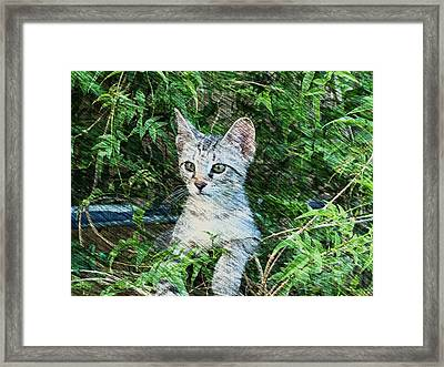 Little Kitten Framed Print by Kathy Churchman