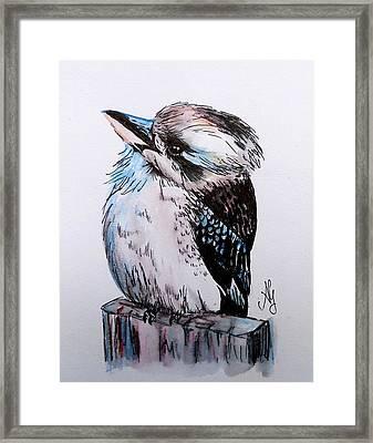 Little Kookaburra Framed Print
