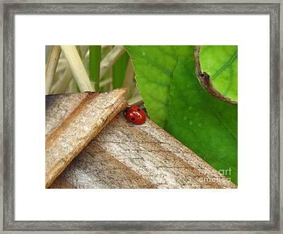 Little Lazy Ladybug Framed Print