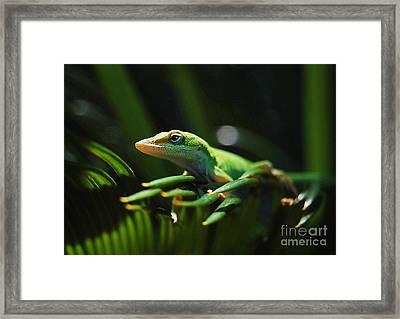 Little Lizard On A Sago Palm Framed Print by Kathy Baccari