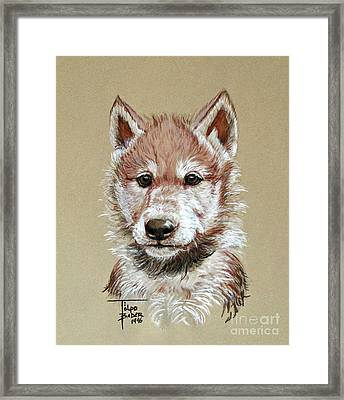 Little Lobo Framed Print