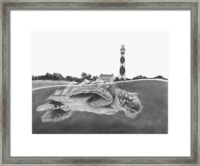 Little Loggerhead Cruisin' The Cape Framed Print