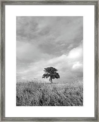 Little Lone Oak Tree Framed Print