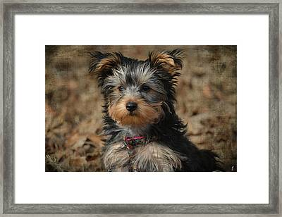 Little Miss Curious Framed Print by Jai Johnson