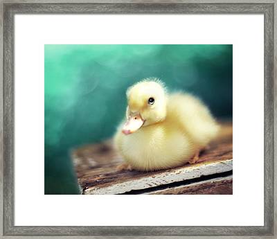 Little Miss Sunshine Framed Print by Amy Tyler