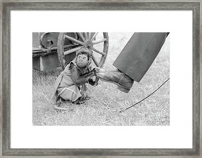 Little Monkey Shining Shoes Framed Print