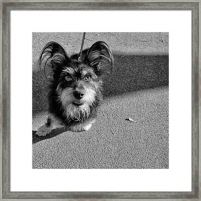 Little Monster Framed Print by Oleksandr Maistrenko