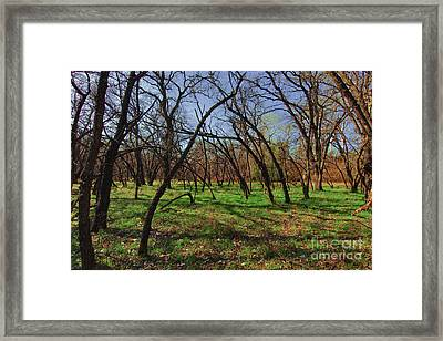 Little Oaks Framed Print by David Taylor