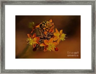 Little Orange Flowers Framed Print