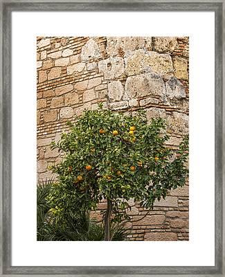 Little Orangetree Framed Print by Lutz Baar