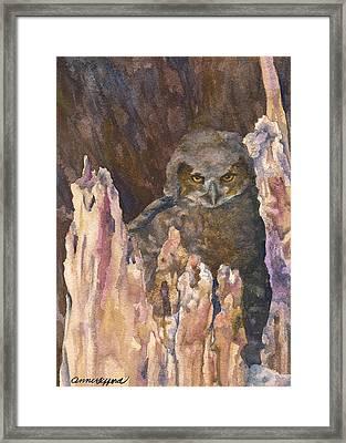 Little Owl Framed Print by Anne Gifford