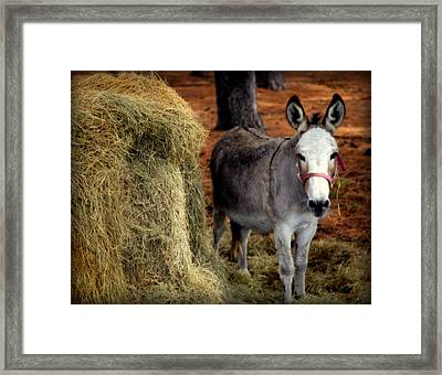 Little Pedro Framed Print by Karen Wiles