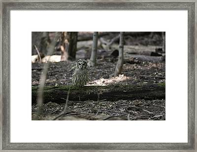 Little People Of The Forest Framed Print by Everet Regal