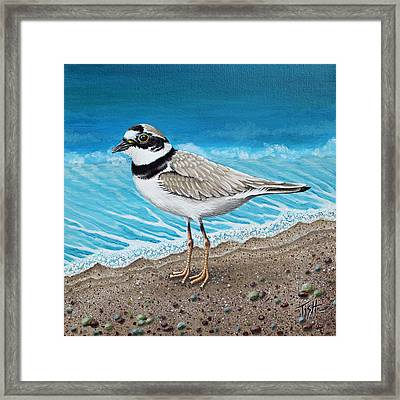 Little Plover Framed Print