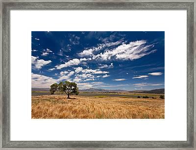 Little Prarie - Big Sky Framed Print