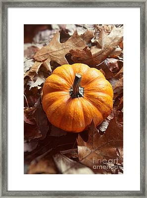 Framed Print featuring the photograph Little Pumpkin In A Bunch Of Leaves by Sandra Cunningham