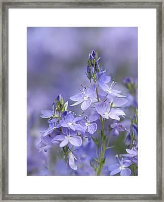 Little Purple Flowers Vertical Framed Print