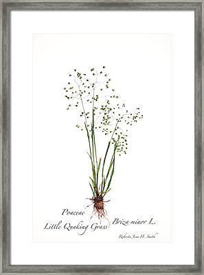 Little Quaking Grass Framed Print