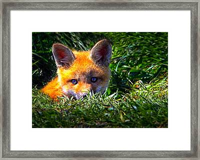 Little Red Fox Framed Print by Bob Orsillo