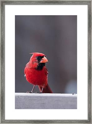 Little Red Framed Print by Joe Scott