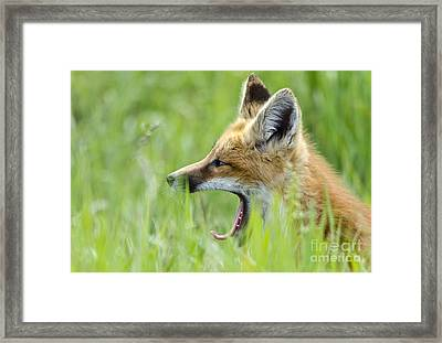 Little Red Sleepy Head Framed Print