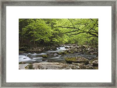 Little River Respite Framed Print