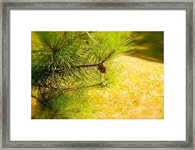 Little Seed Big Energy  Framed Print by Danielle  Broussard