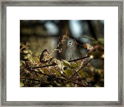 Little Sharp Eyed Bird Framed Print by Belinda Greb