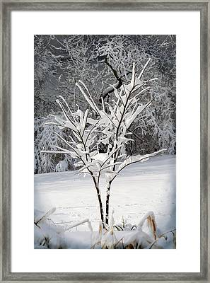 Little Snow Tree Framed Print by Karen Adams