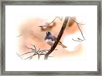 Little Snowbird - Junco 3738-002 Framed Print