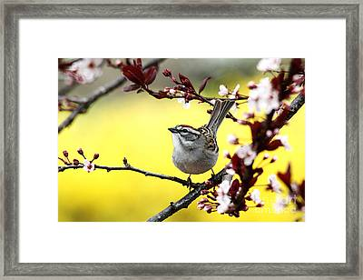 Framed Print featuring the photograph Little Sparrow by Trina  Ansel