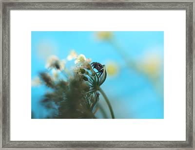 Little Spider Framed Print
