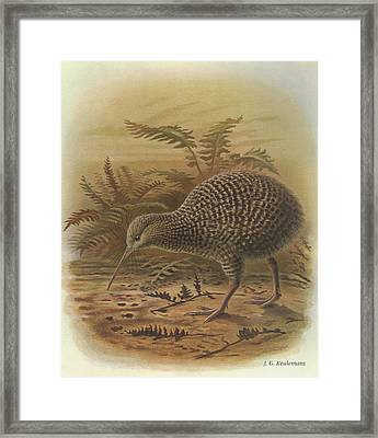 Little Spotted Kiwi Framed Print by Dreyer Wildlife Print Collections