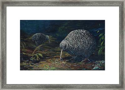 Little Spotted Kiwi Framed Print by Peter Jean Caley