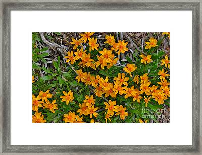 Framed Print featuring the photograph Little Sunflower In The Mountains by Janice Rae Pariza
