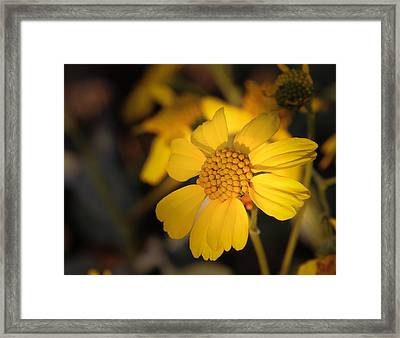 little Sunshine Framed Print